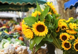 Discovering the Culinary & Cultural Delights of Provence