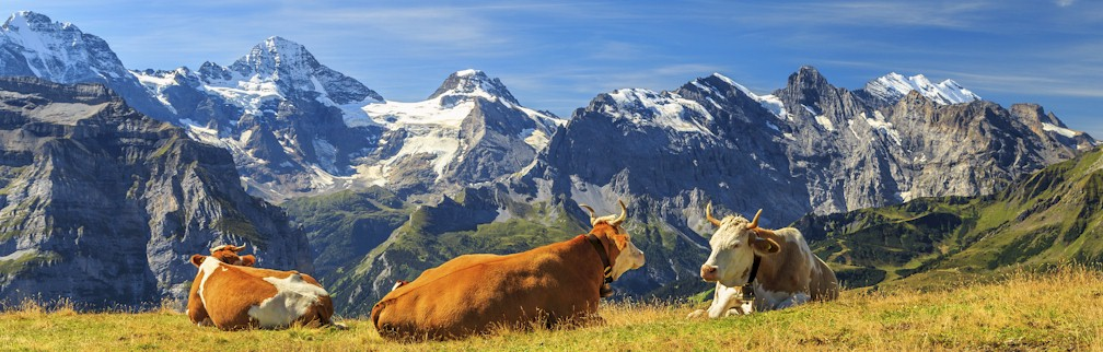 Switzerland Culinary Travel